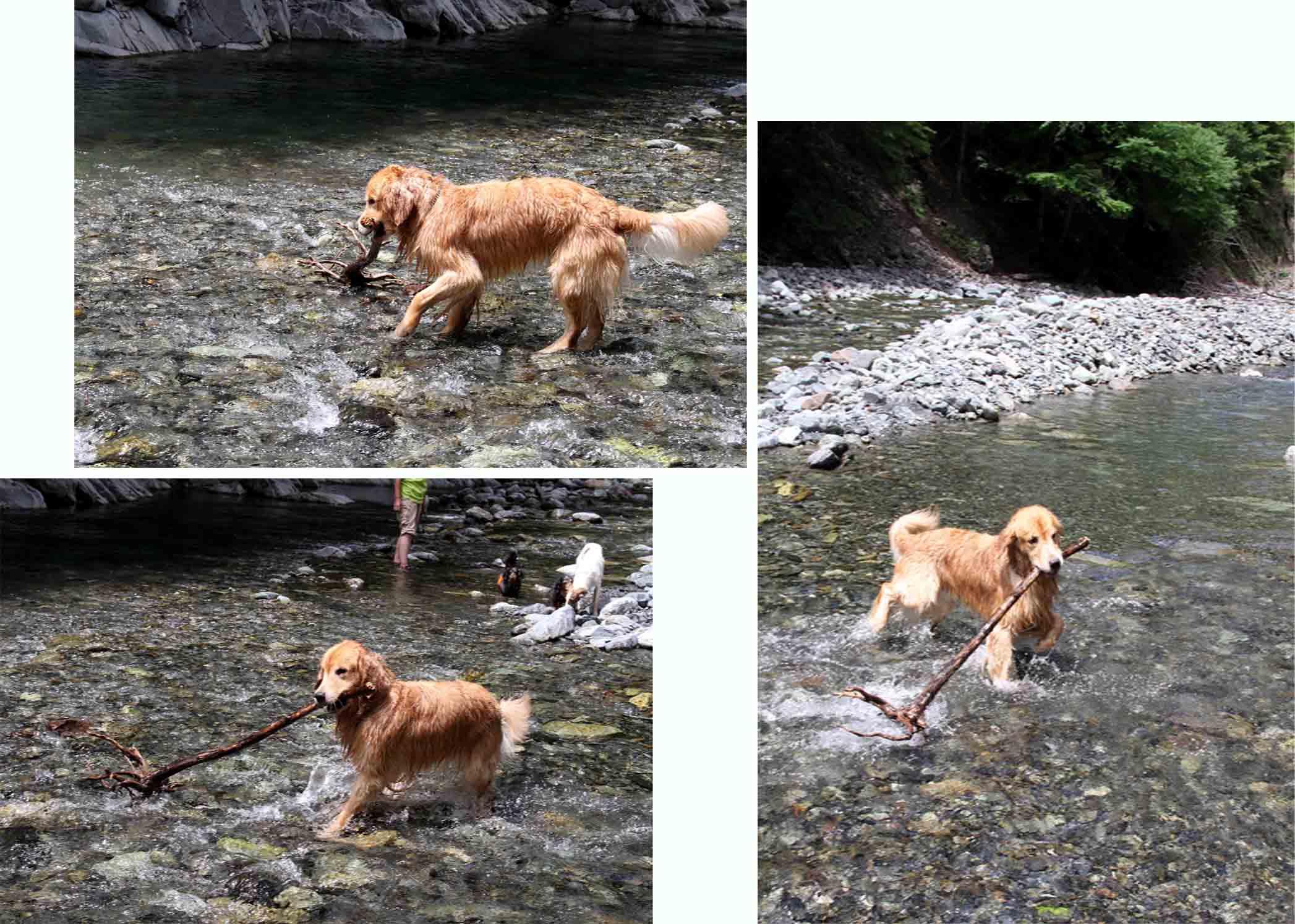 三峰川 7月14日 3度目の渓流 レトリーブ(3)