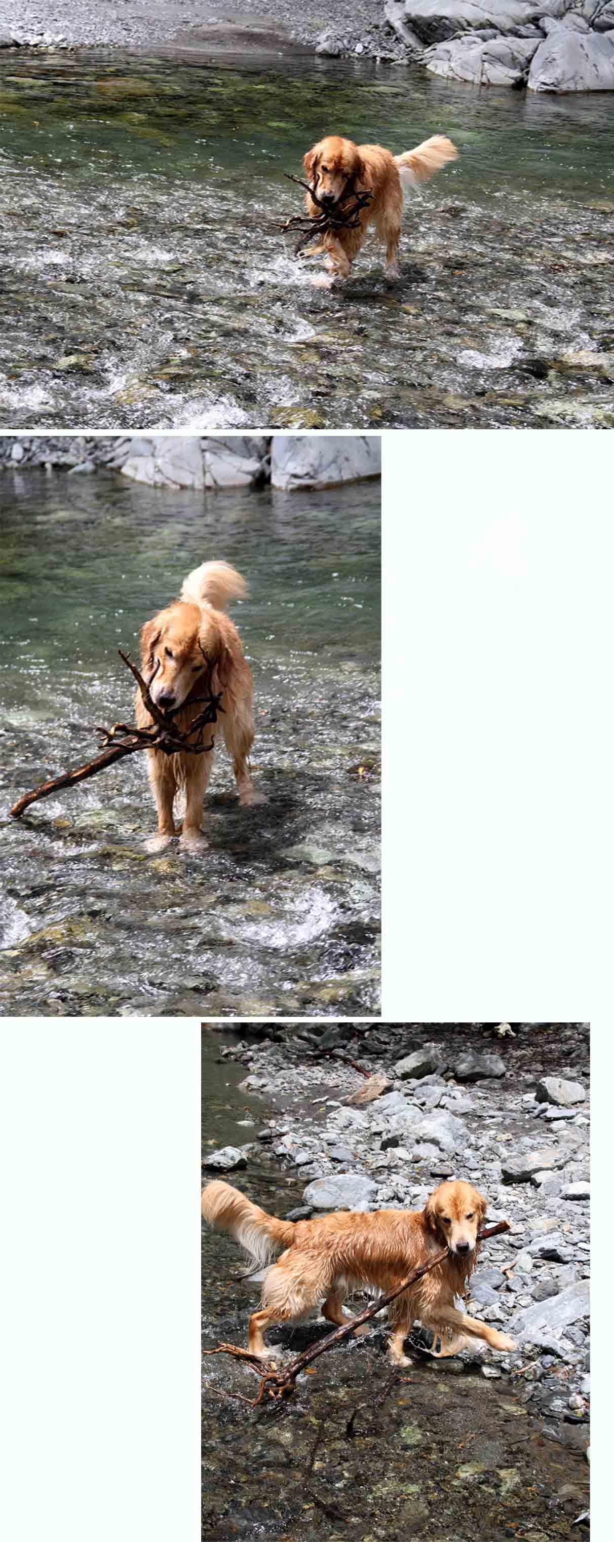 三峰川 7月14日 3度目の渓流 レトリーブ(4)