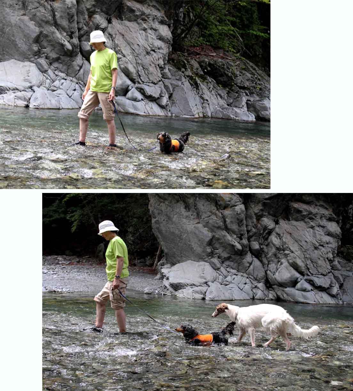 三峰川 7月14日 渓流散歩