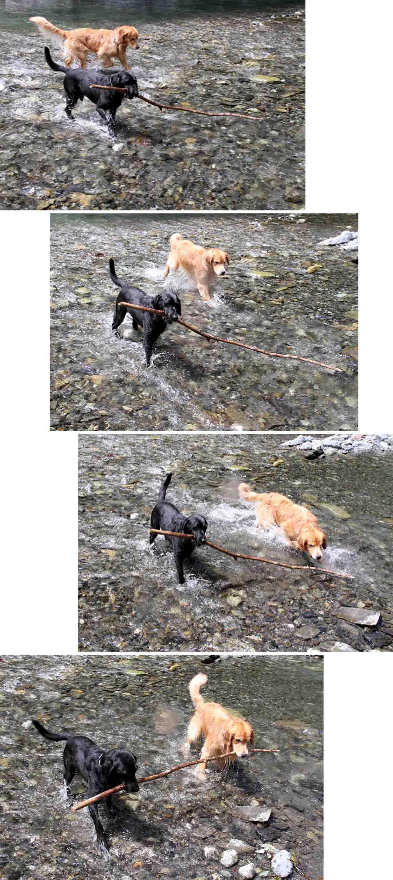 三峰川 7月14日 3度目の渓流 レトリーブ(6)