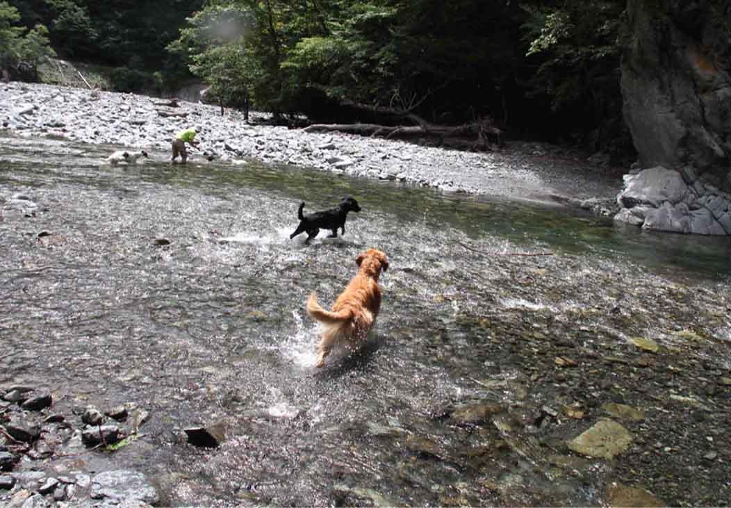 三峰川 7月14日 3度目の渓流 レトリーブ(8)