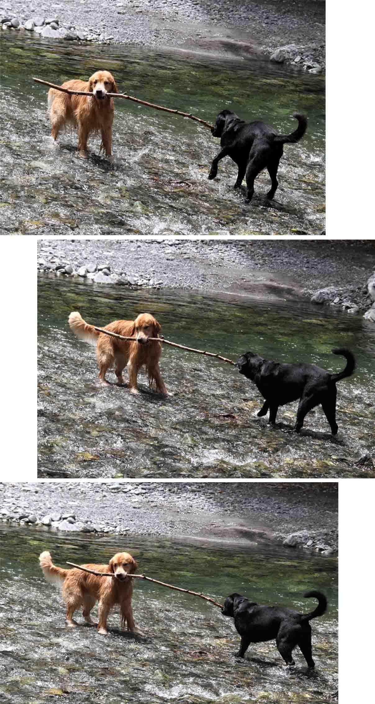 三峰川 7月14日 3度目の渓流 レトリーブ(9)