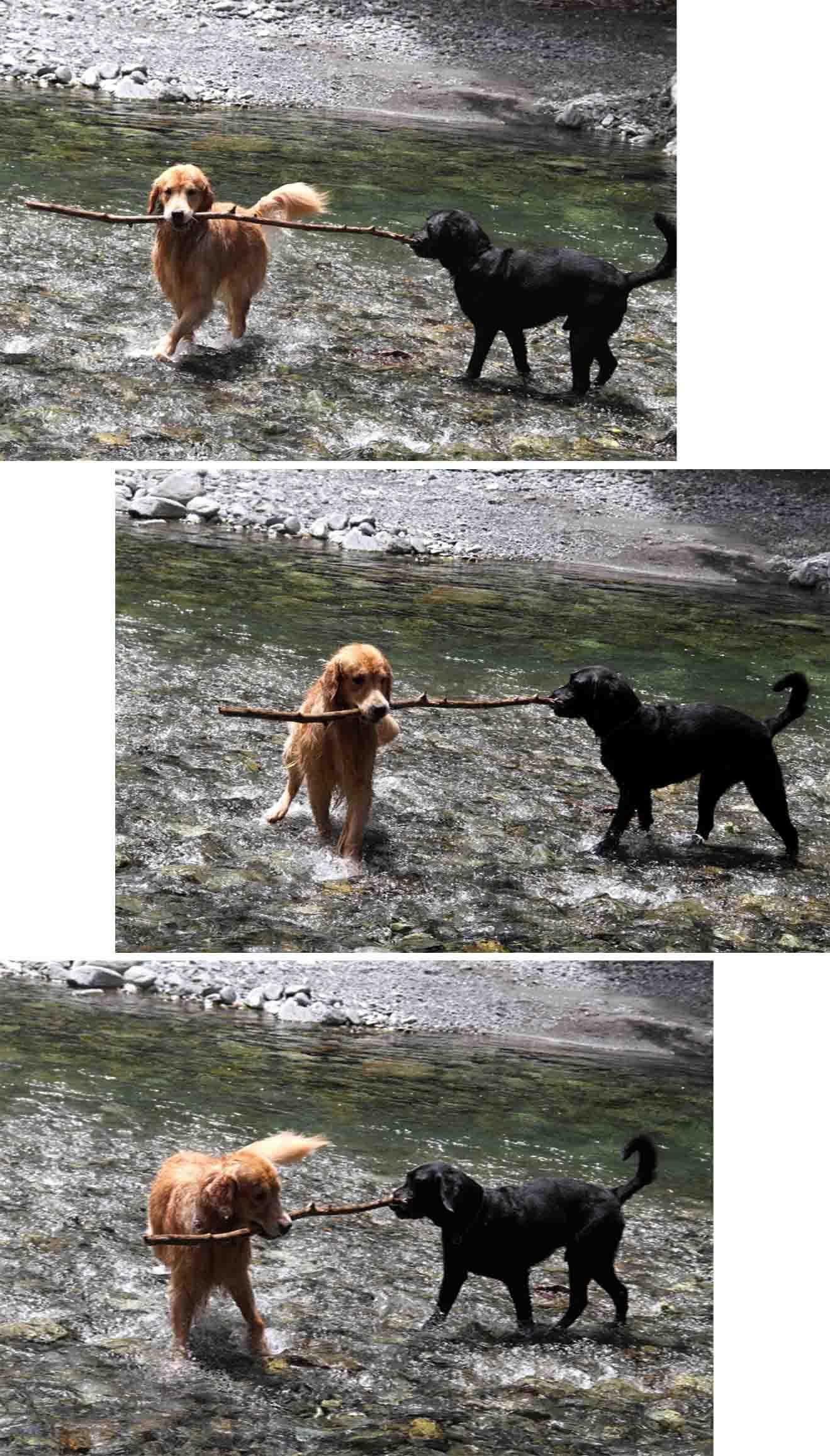 三峰川 7月14日 3度目の渓流 レトリーブ(10)