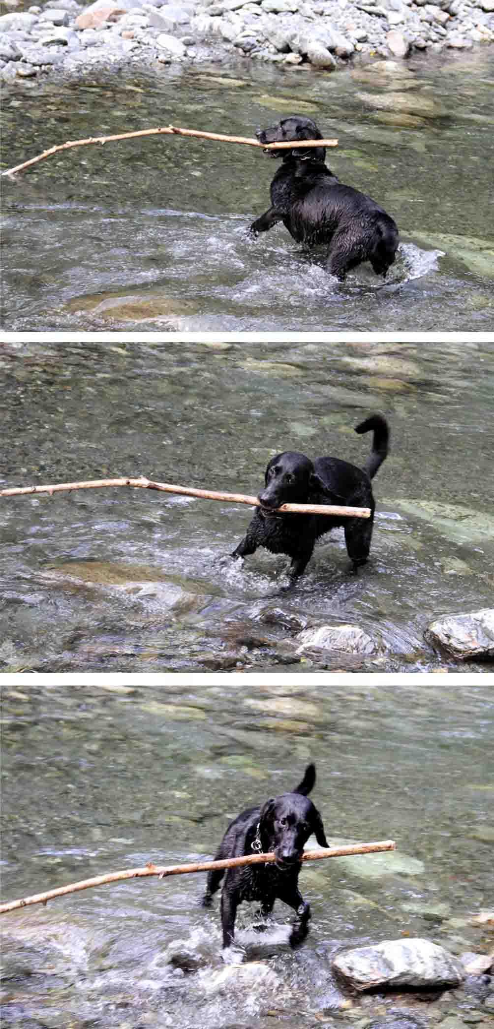 三峰川 7月14日 3度目の渓流 レトリーブ(18)