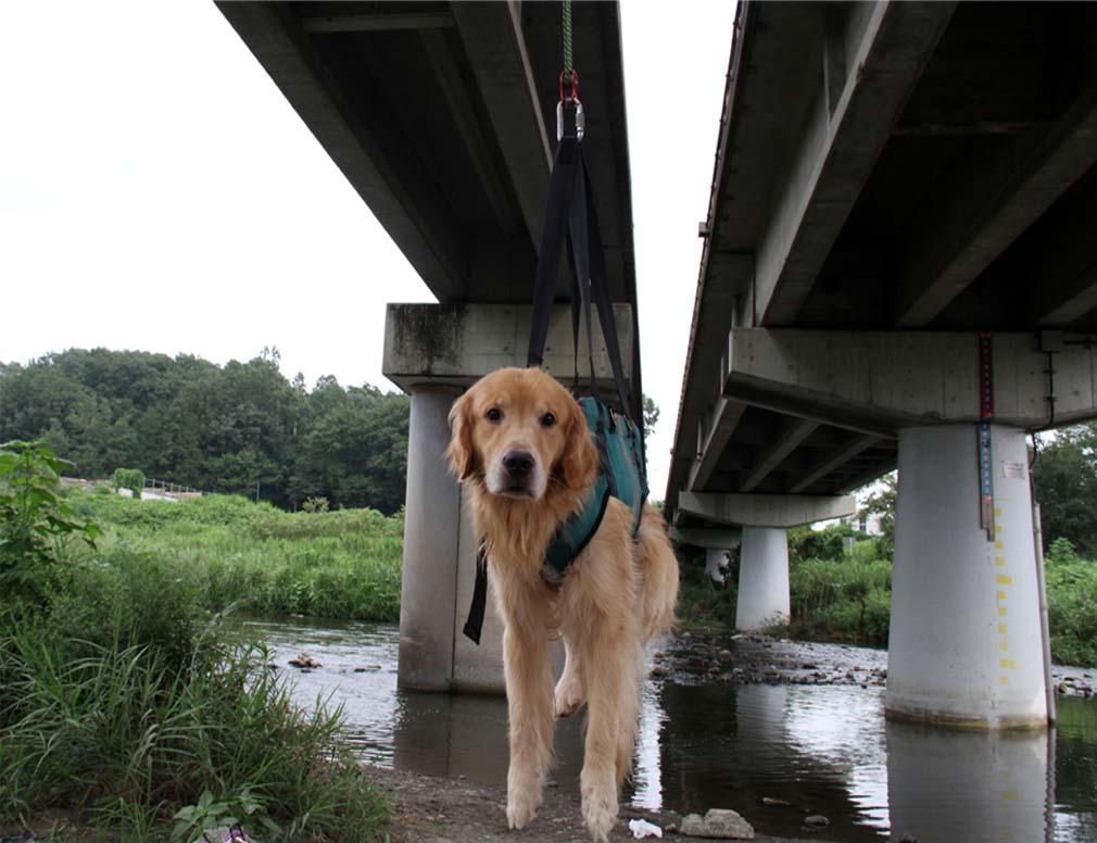 犬の吊り下げ(1)