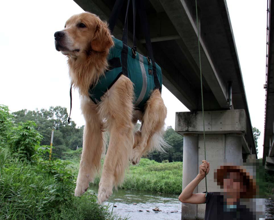 犬の吊り下げ(2)