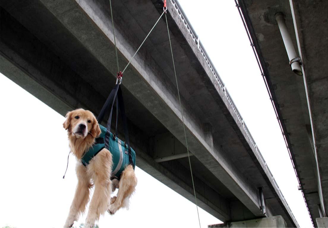 犬の吊り下げ(4)