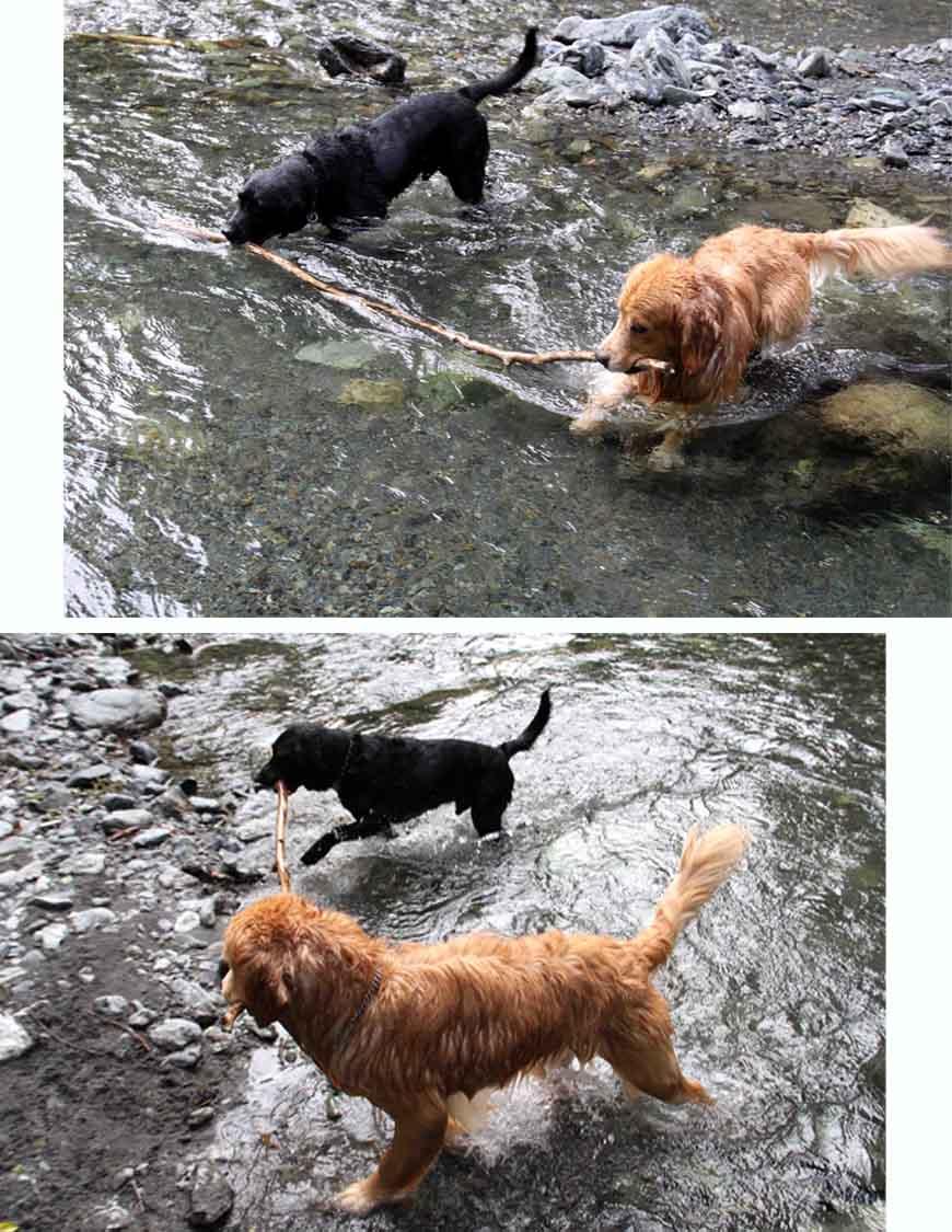 三峰川 7月14日 3度目の渓流 レトリーブ(24)