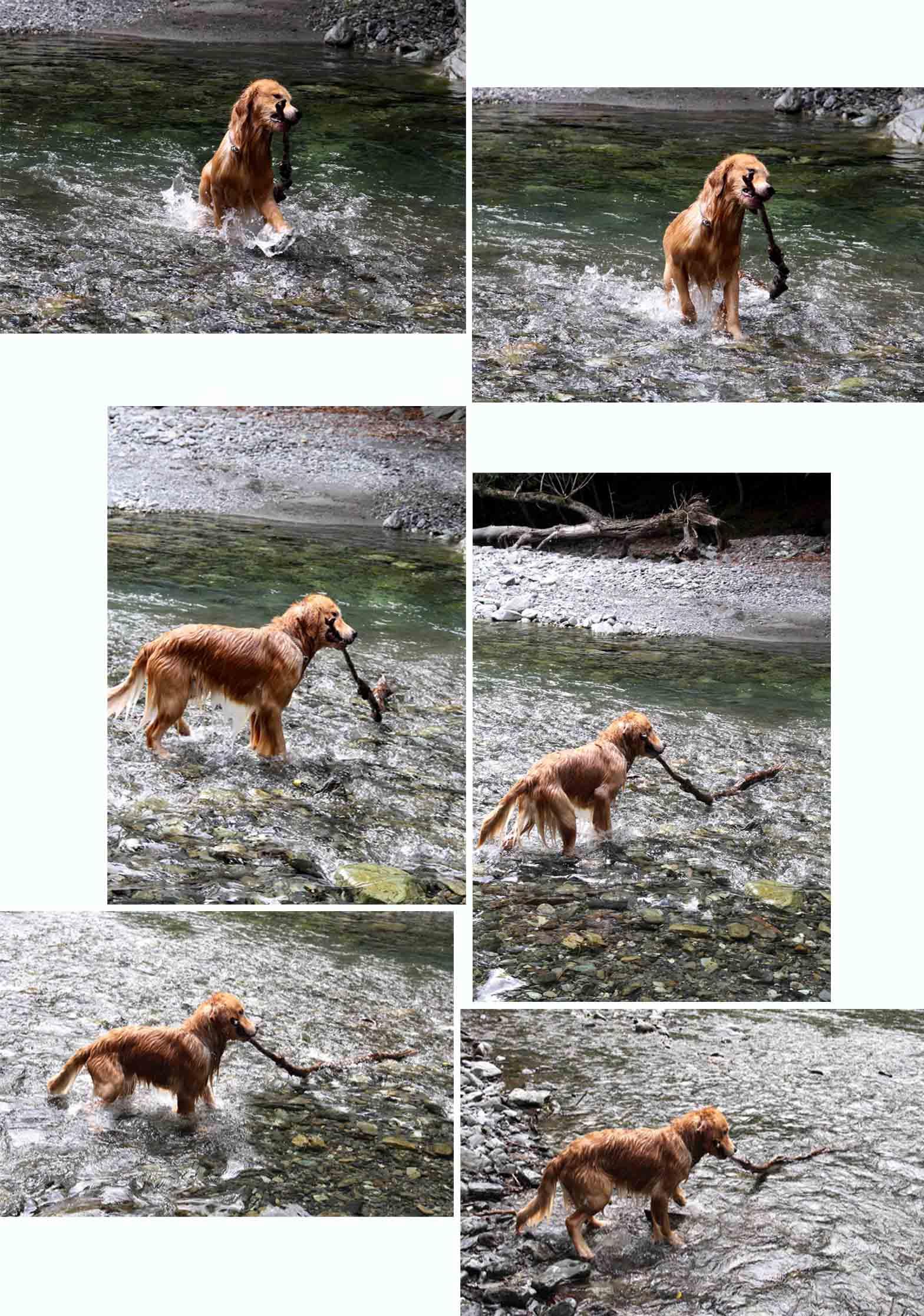 三峰川 7月14日 3度目の渓流 レトリーブ(28)