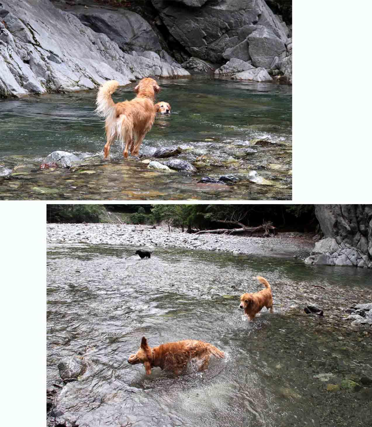 三峰川 7月14日 3度目の渓流 レトリーブ(30)