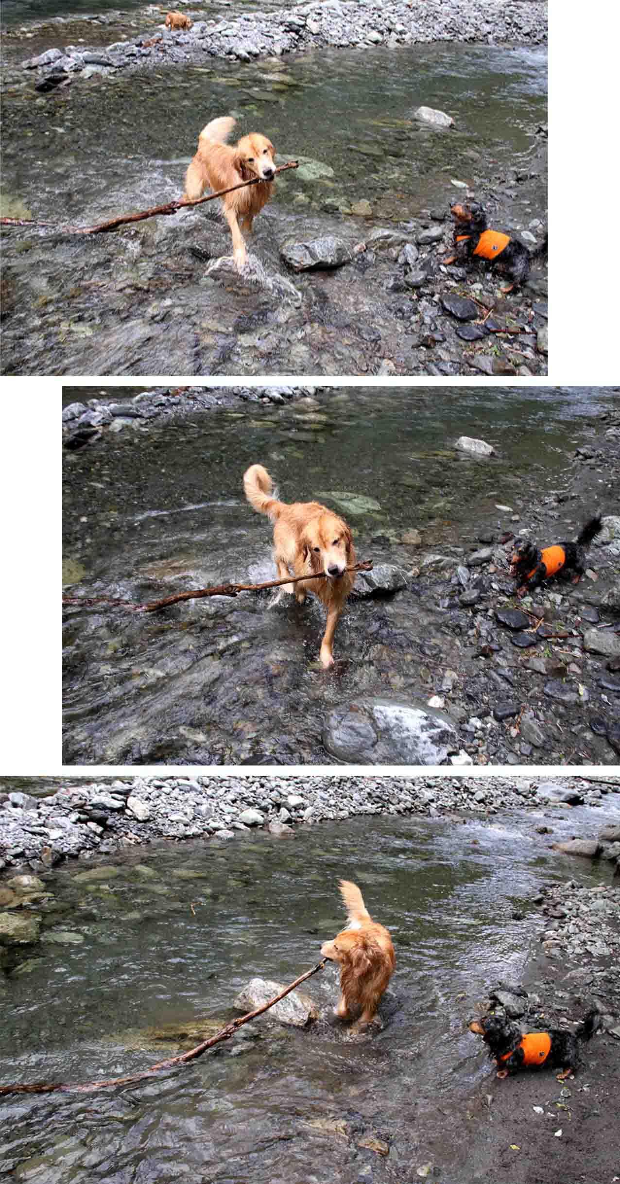 三峰川 7月14日 3度目の渓流 レトリーブ(32)