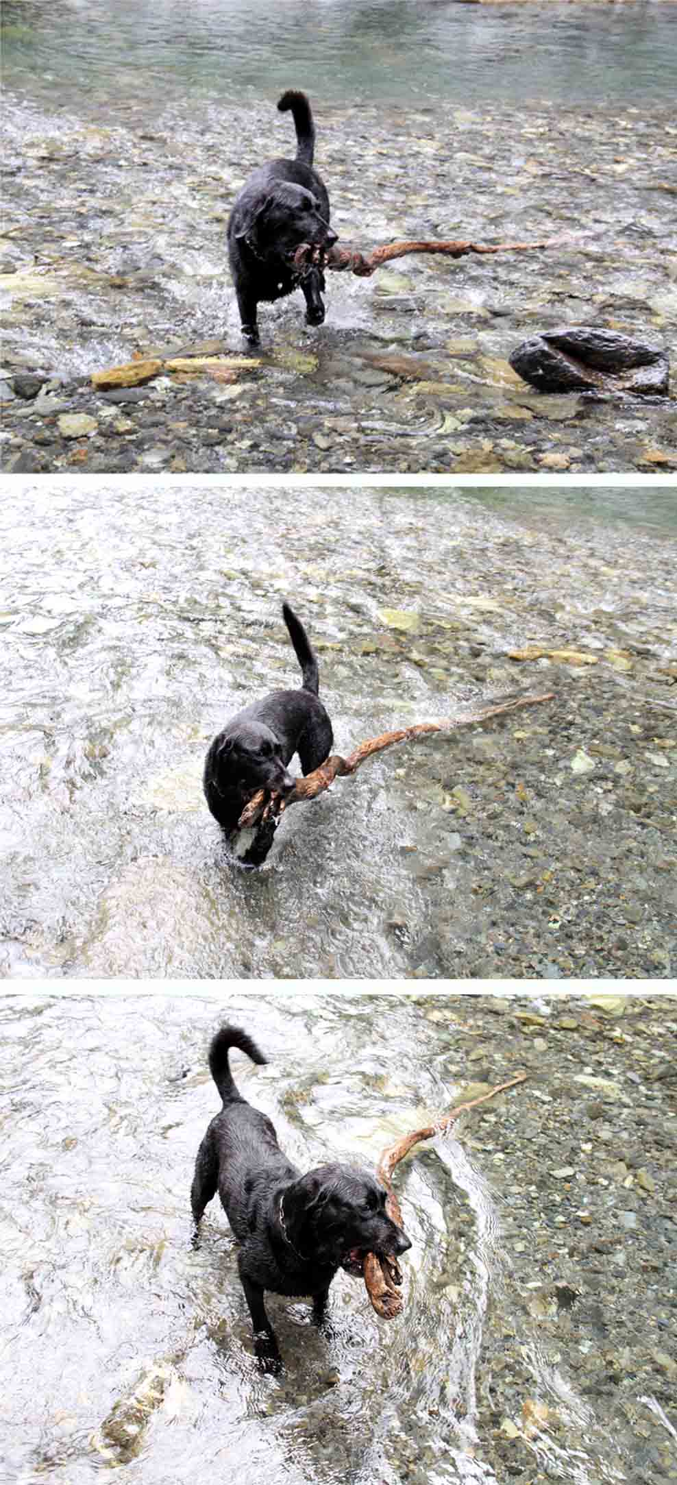 三峰川 7月14日 3度目の渓流 レトリーブ(35)