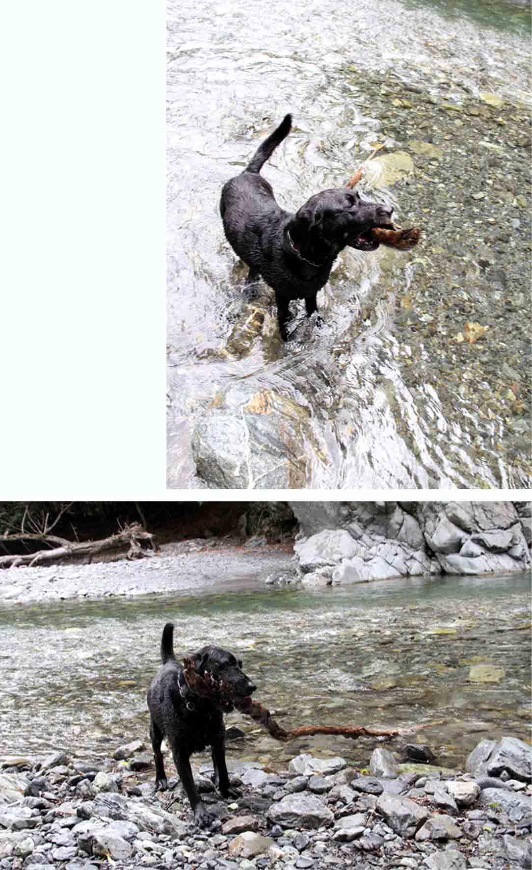 三峰川 7月14日 3度目の渓流 レトリーブ(36)