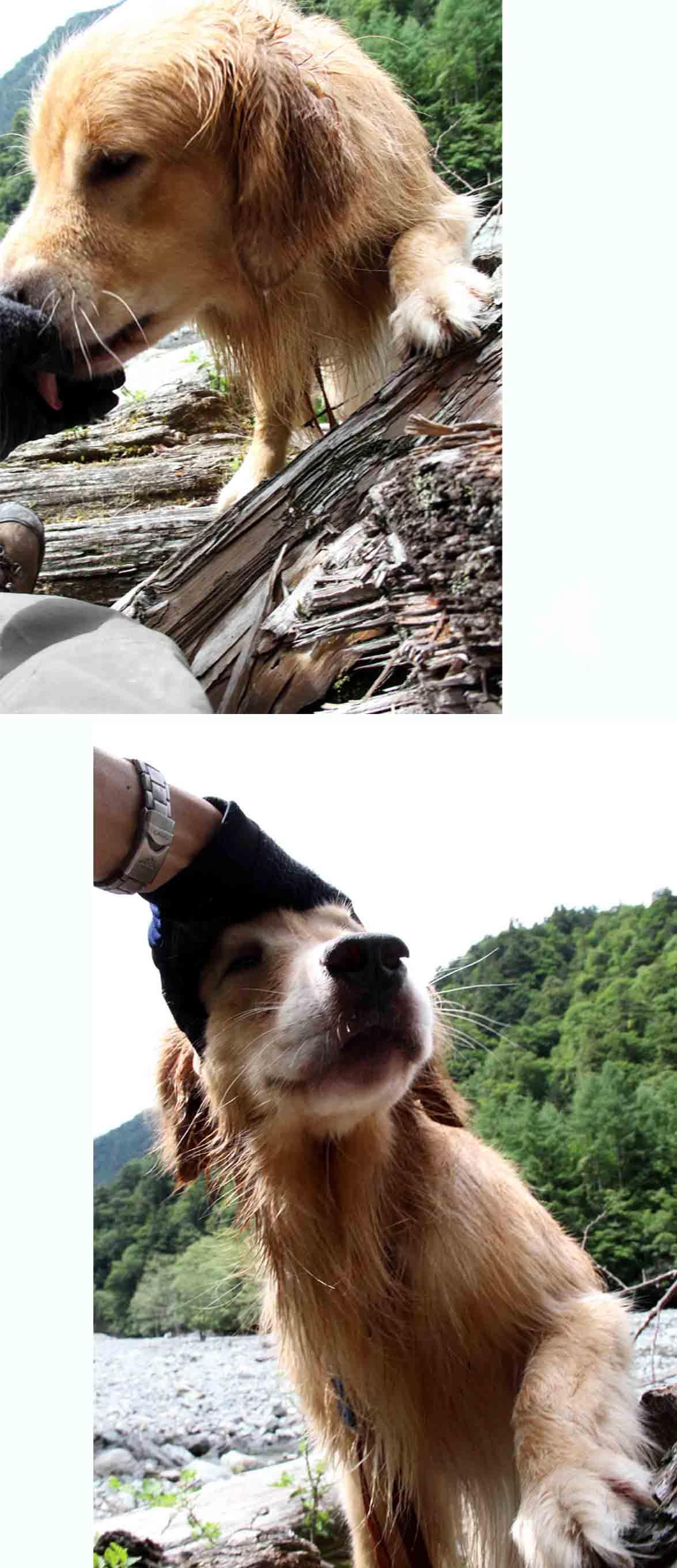 三峰川 7月14日 渓流周辺の捜索(3)