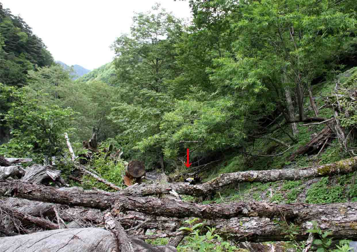 三峰川 7月14日 渓流周辺の捜索(4)