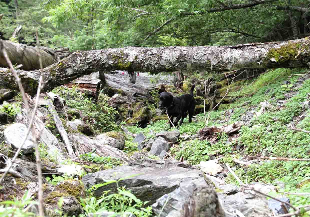 三峰川 7月14日 渓流周辺の捜索(6)