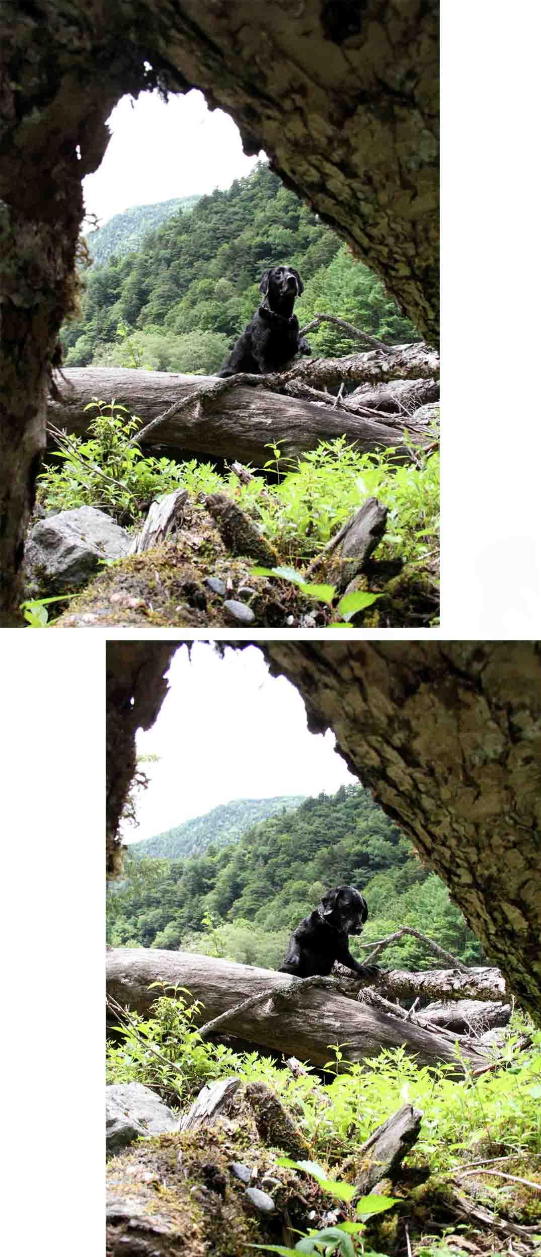 三峰川 7月14日 渓流周辺の捜索(7)