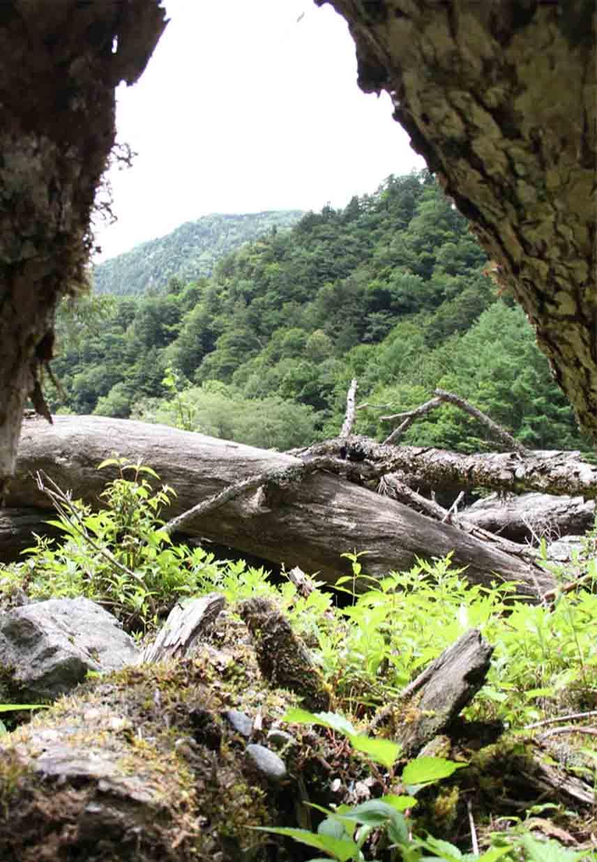 三峰川 7月14日 渓流周辺の捜索(8)
