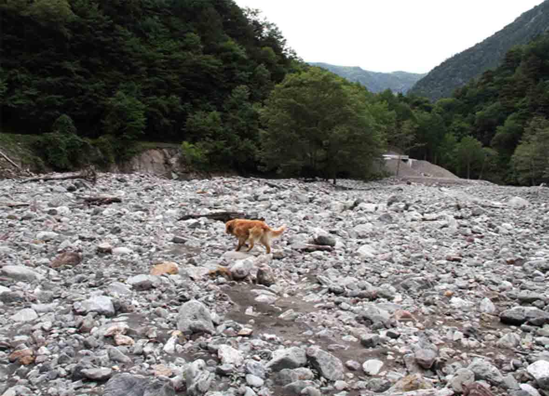 三峰川 7月14日 渓流周辺の捜索(17)
