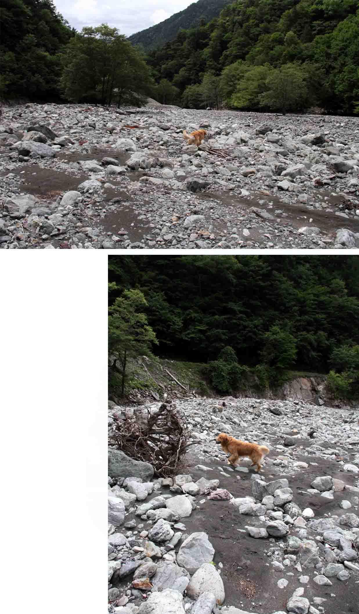 三峰川 7月14日 渓流周辺の捜索(19)