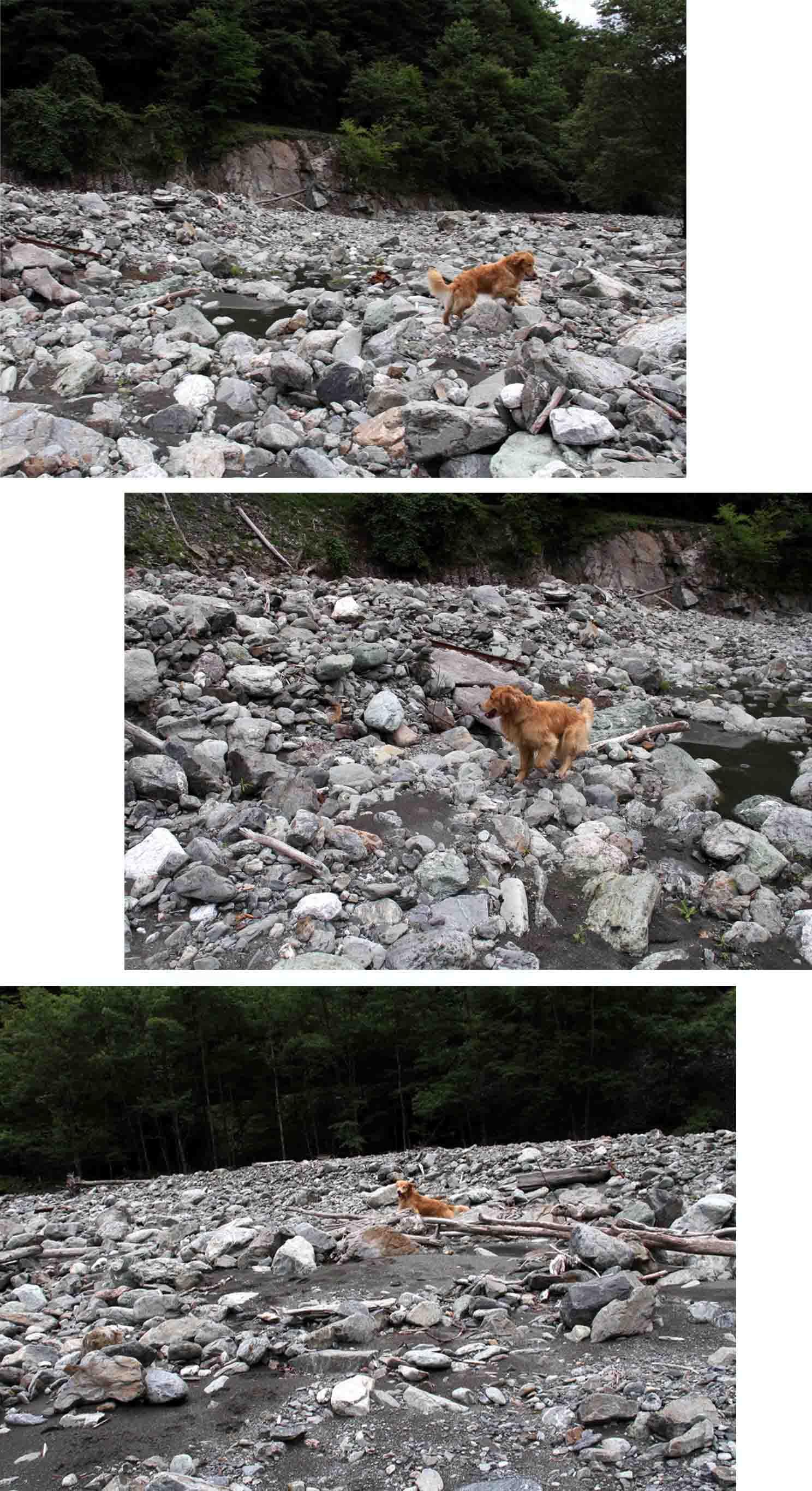 三峰川 7月14日 渓流周辺の捜索(20)