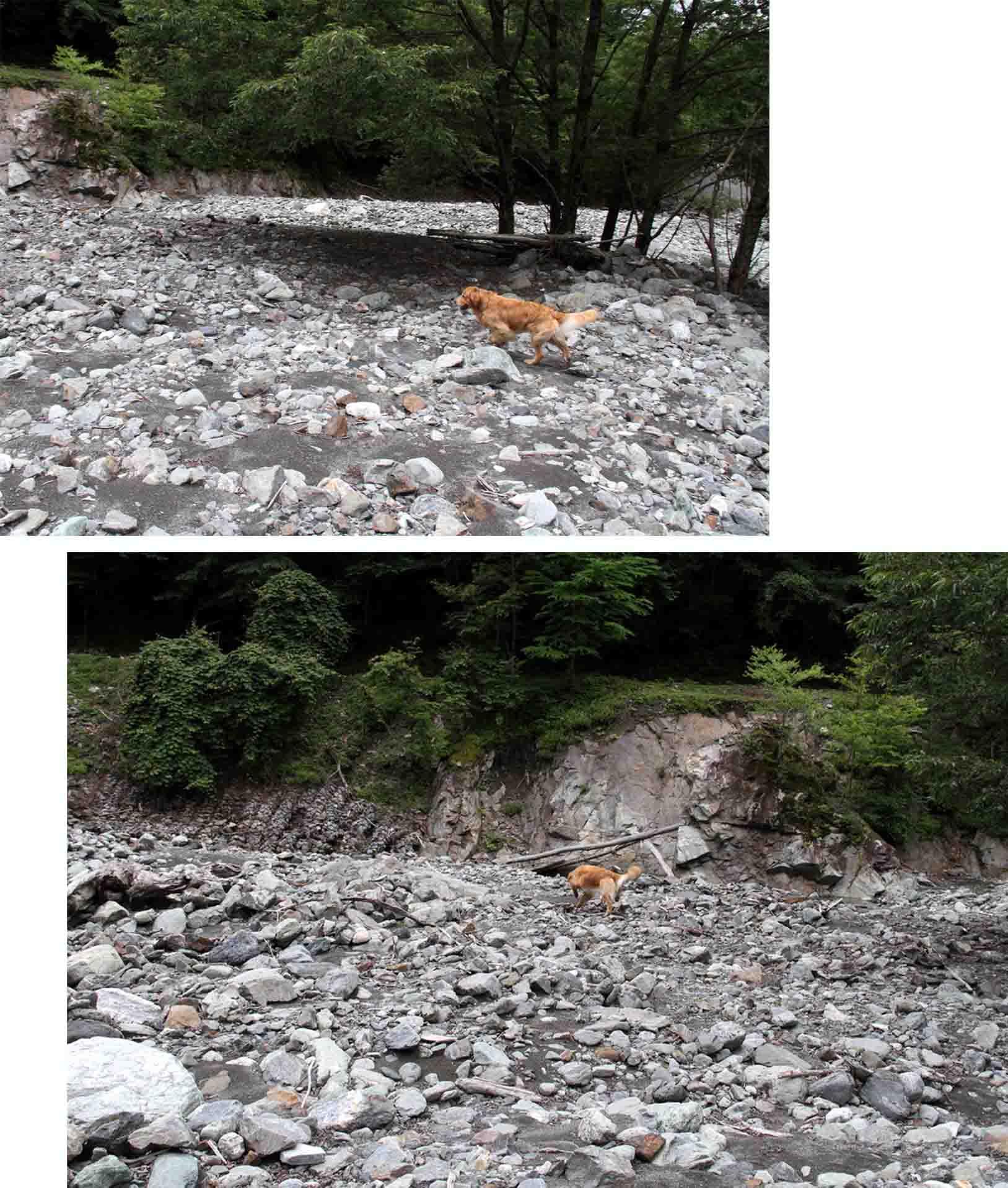 三峰川 7月14日 渓流周辺の捜索(21)