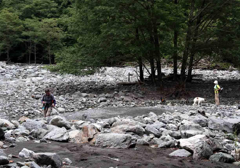 三峰川 7月14日 渓流周辺の捜索(25)
