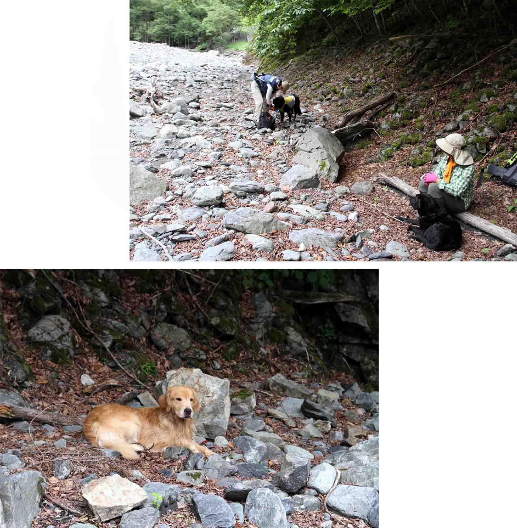 三峰川 7月14日 渓流周辺の捜索(26)