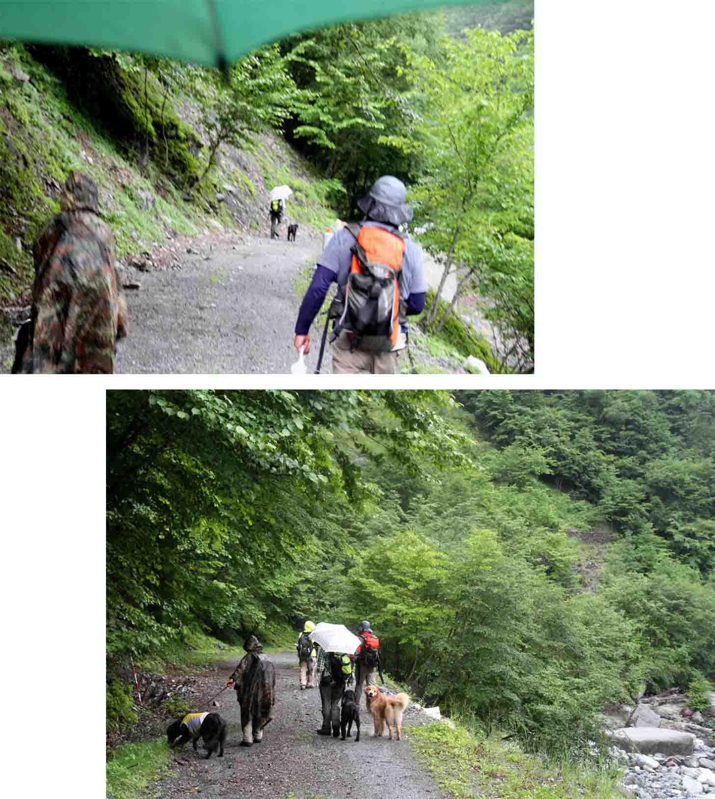 三峰川 7月14日 俄か雨の帰路(1)