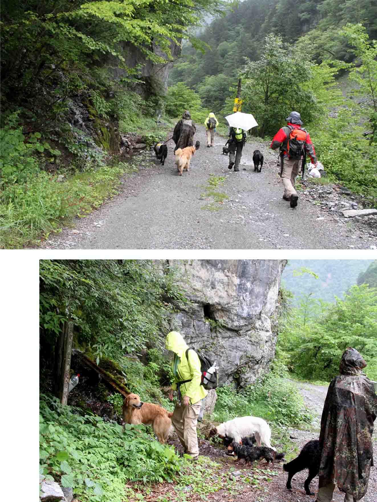 三峰川 7月14日 俄か雨の帰路(2)