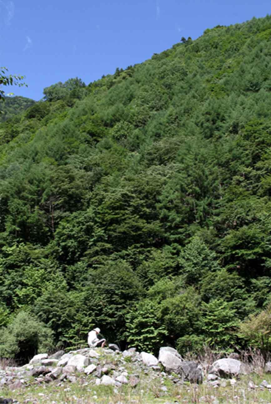 7月15日 三峰川 捜索訓練(1)
