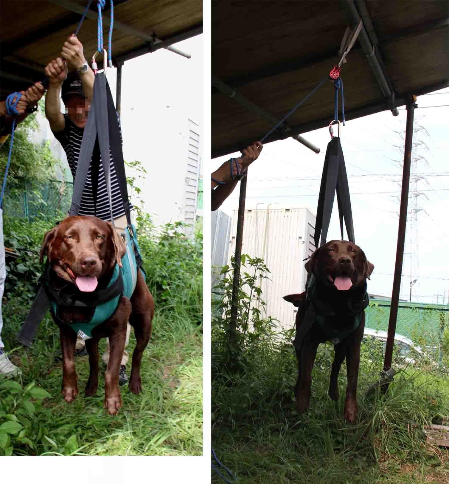 犬の吊り下げ(5)