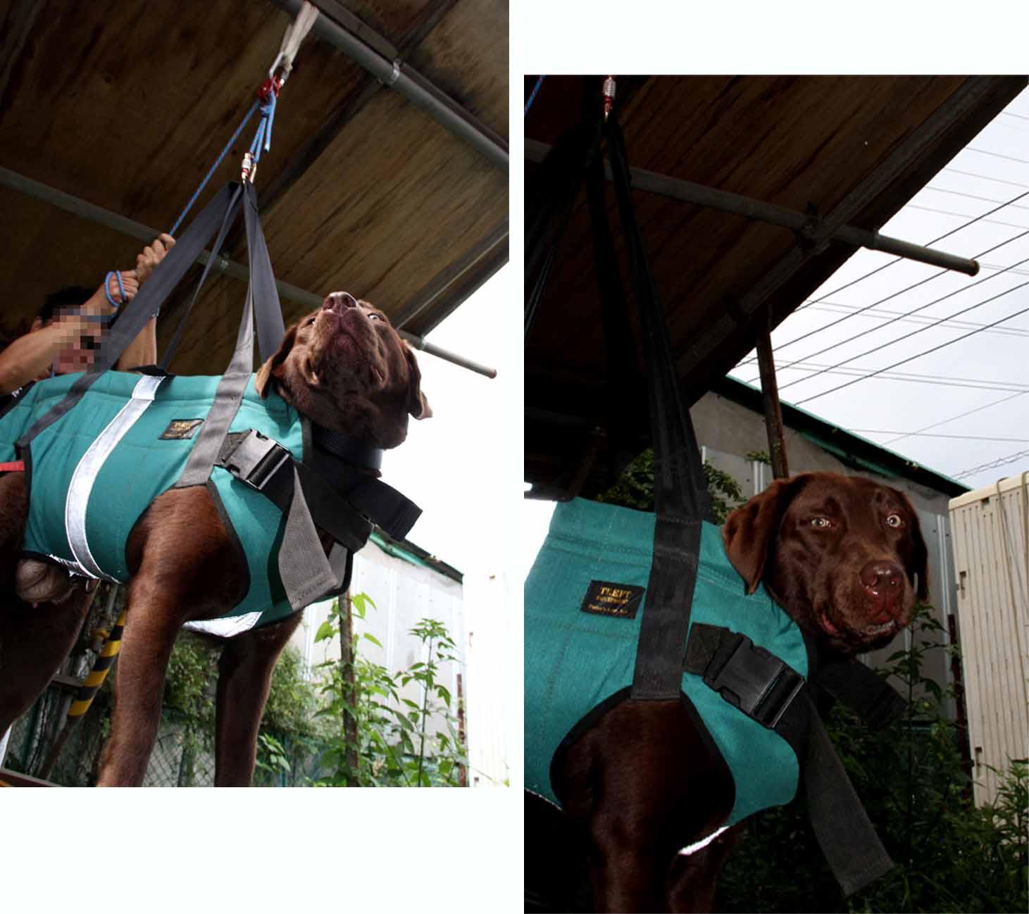 犬の吊り下げ(6)