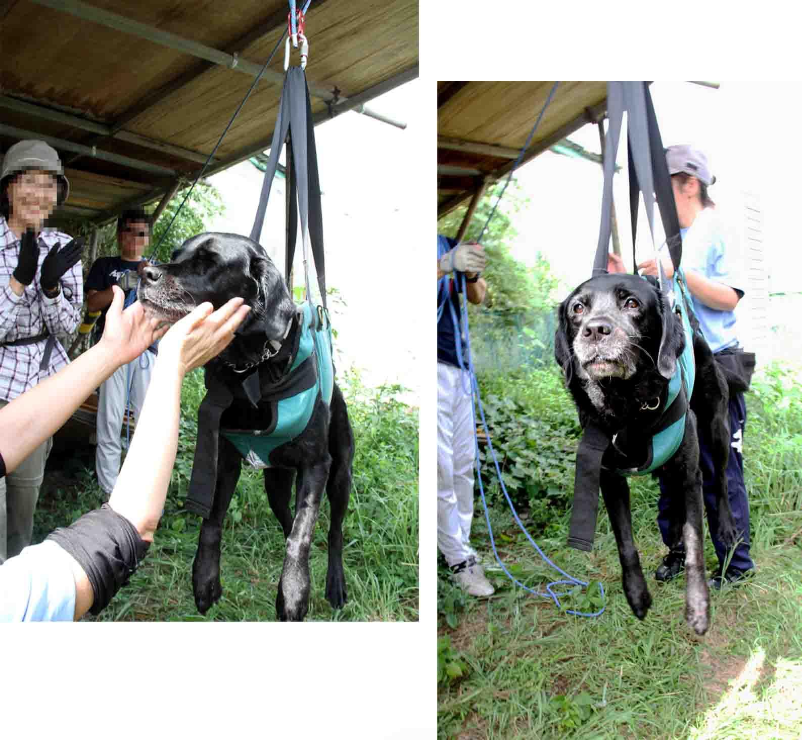 犬の吊り下げ(8)