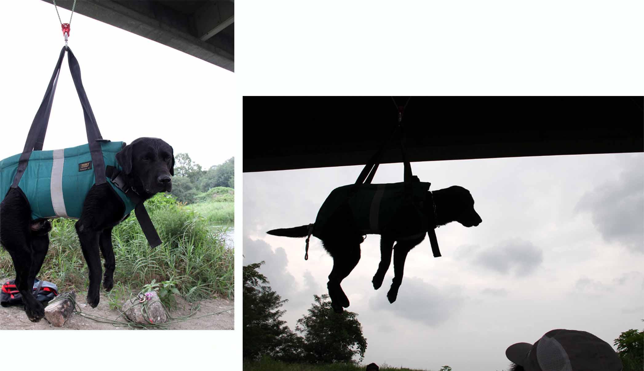 犬の吊り下げ(9)