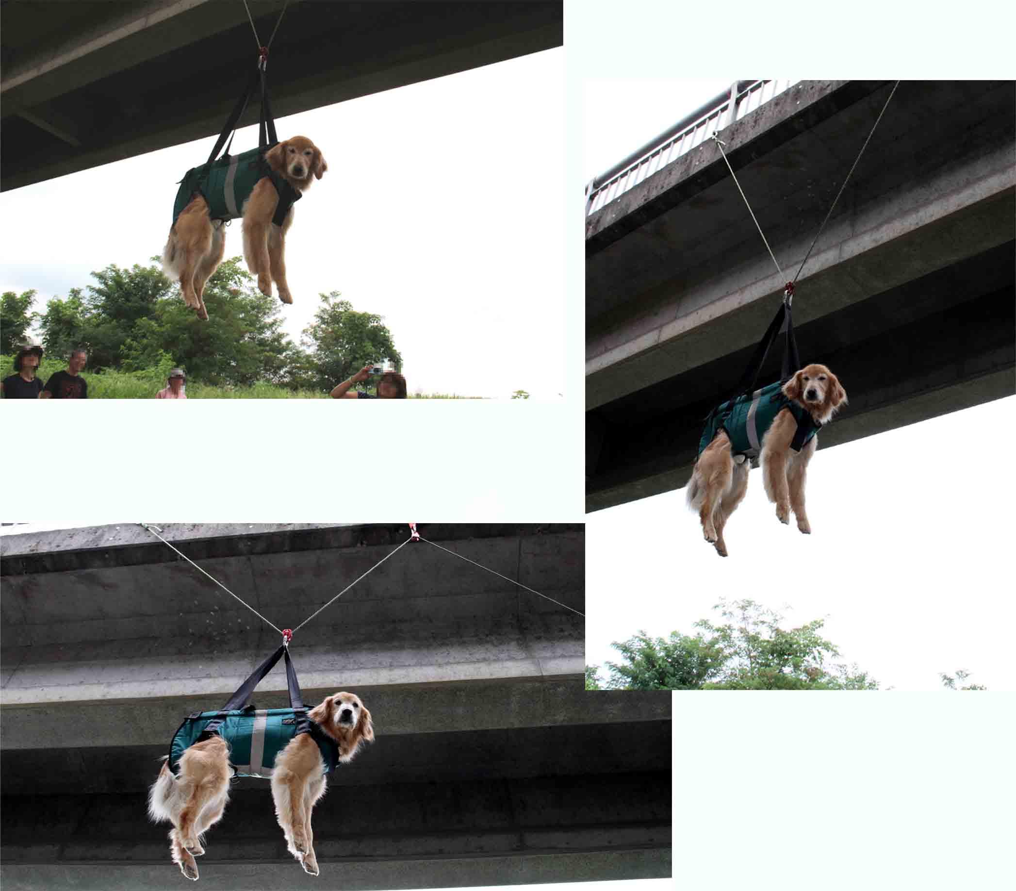 犬の吊り下げ(11)