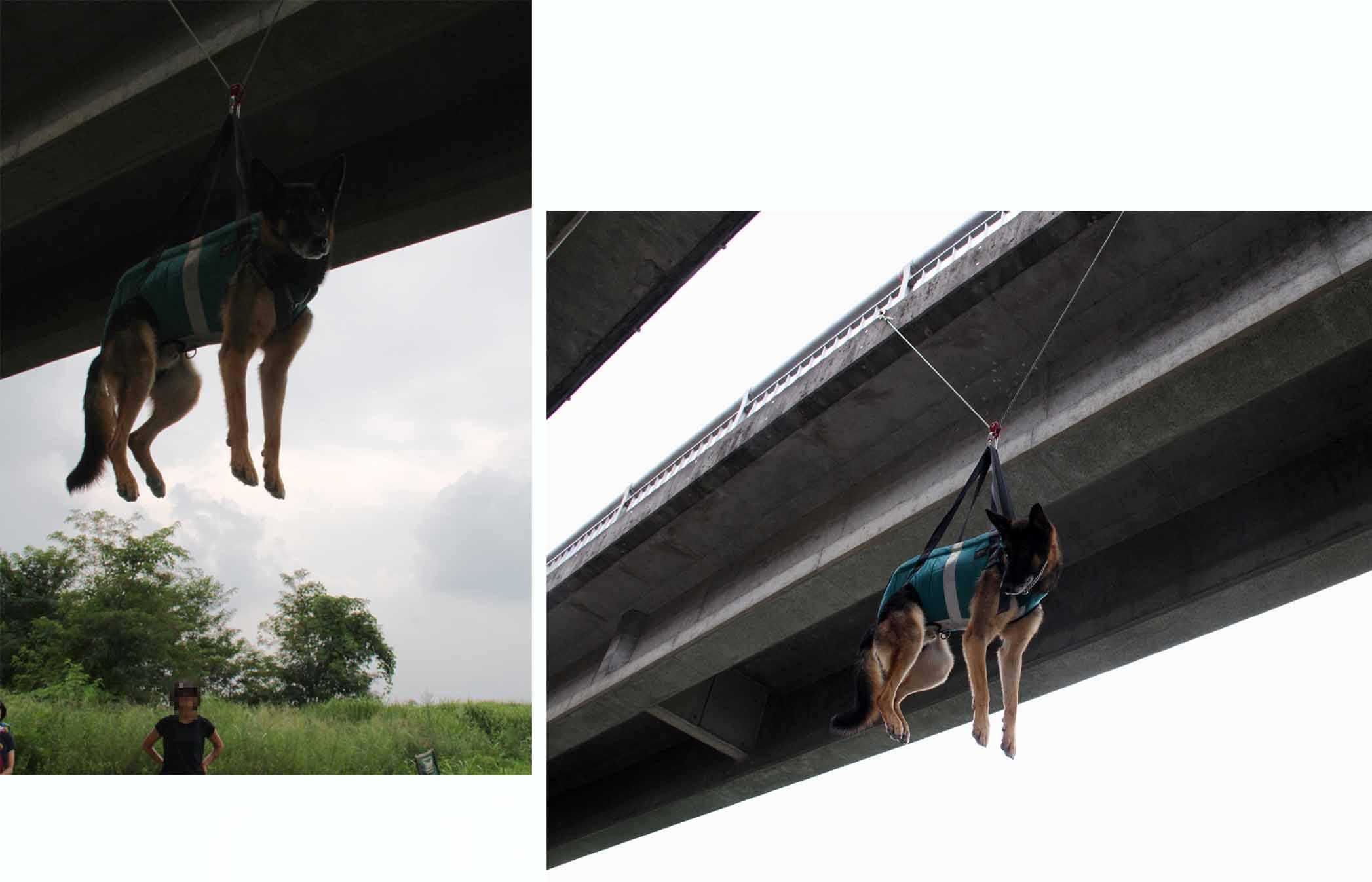 犬の吊り下げ(14)