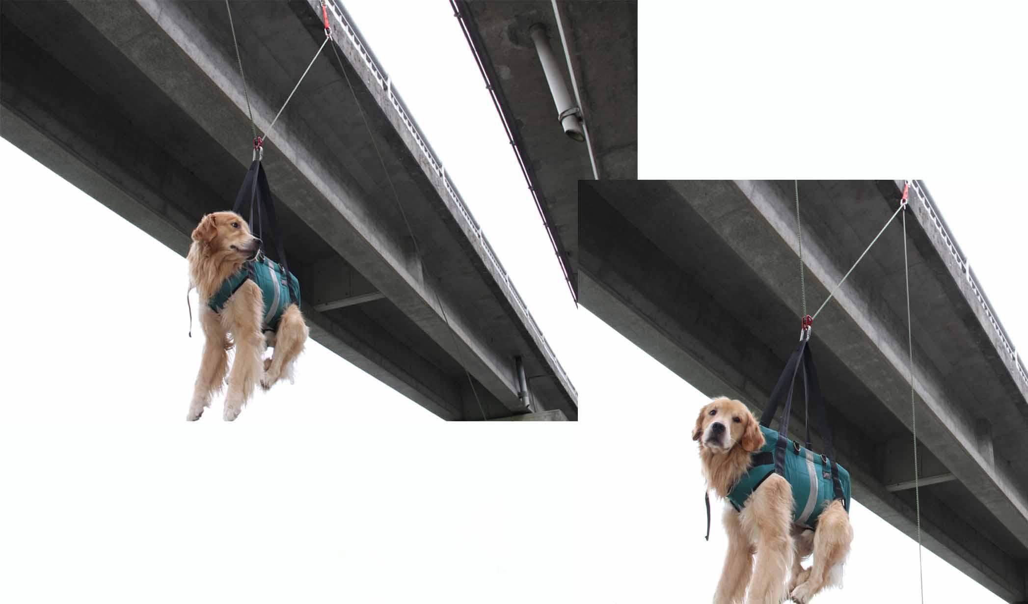 犬の吊り下げ(15)