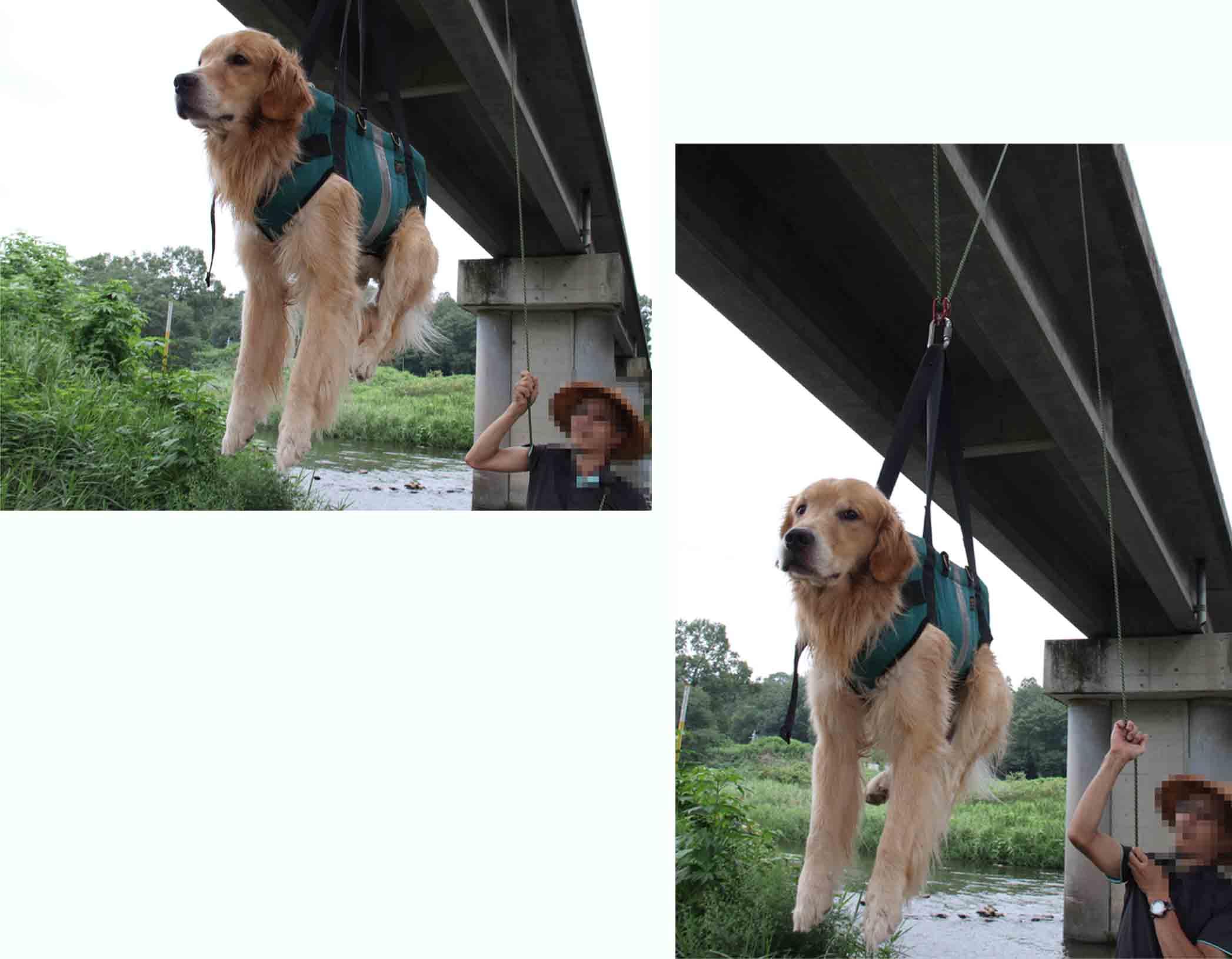 犬の吊り下げ(16)