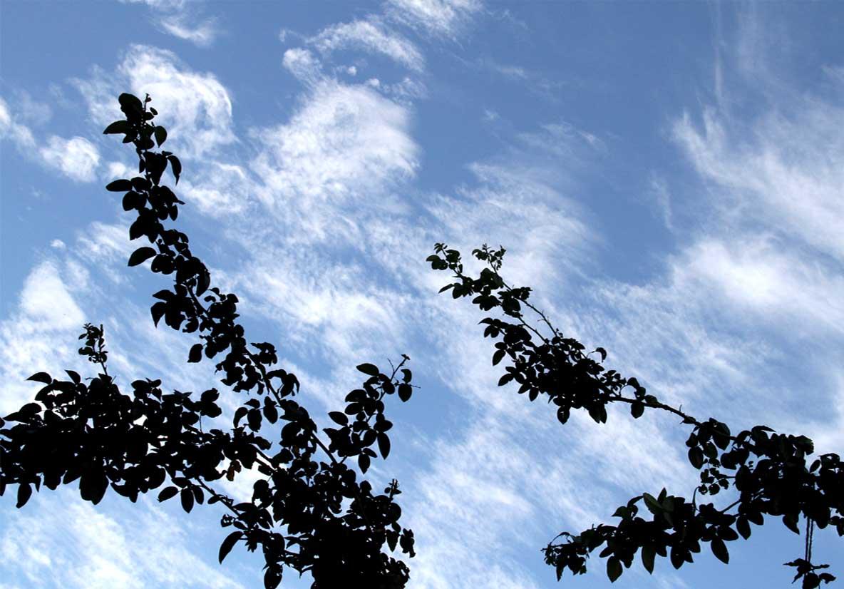バラのシュートと秋の空 (1)