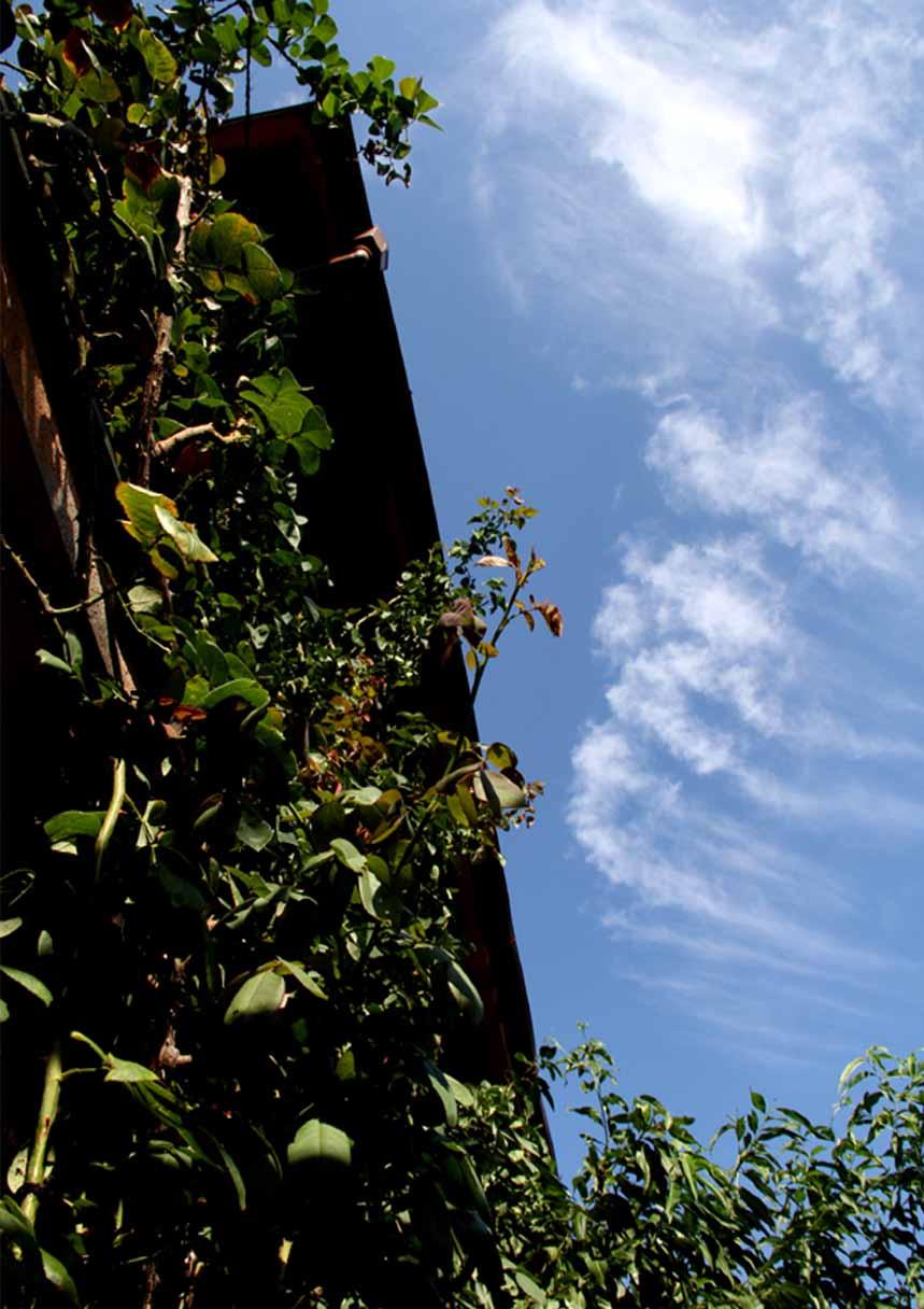 バラのシュートと秋の空 (2)