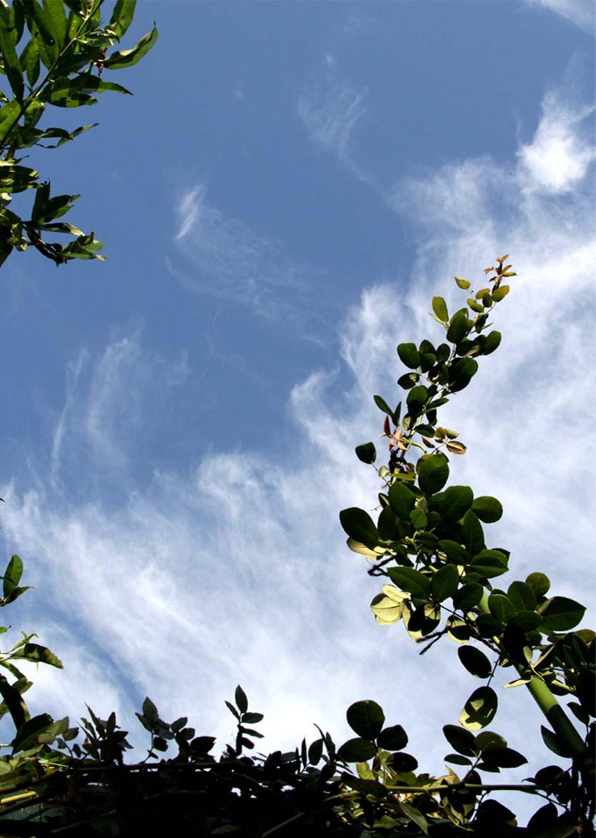 バラのシュートと秋の空 (3)