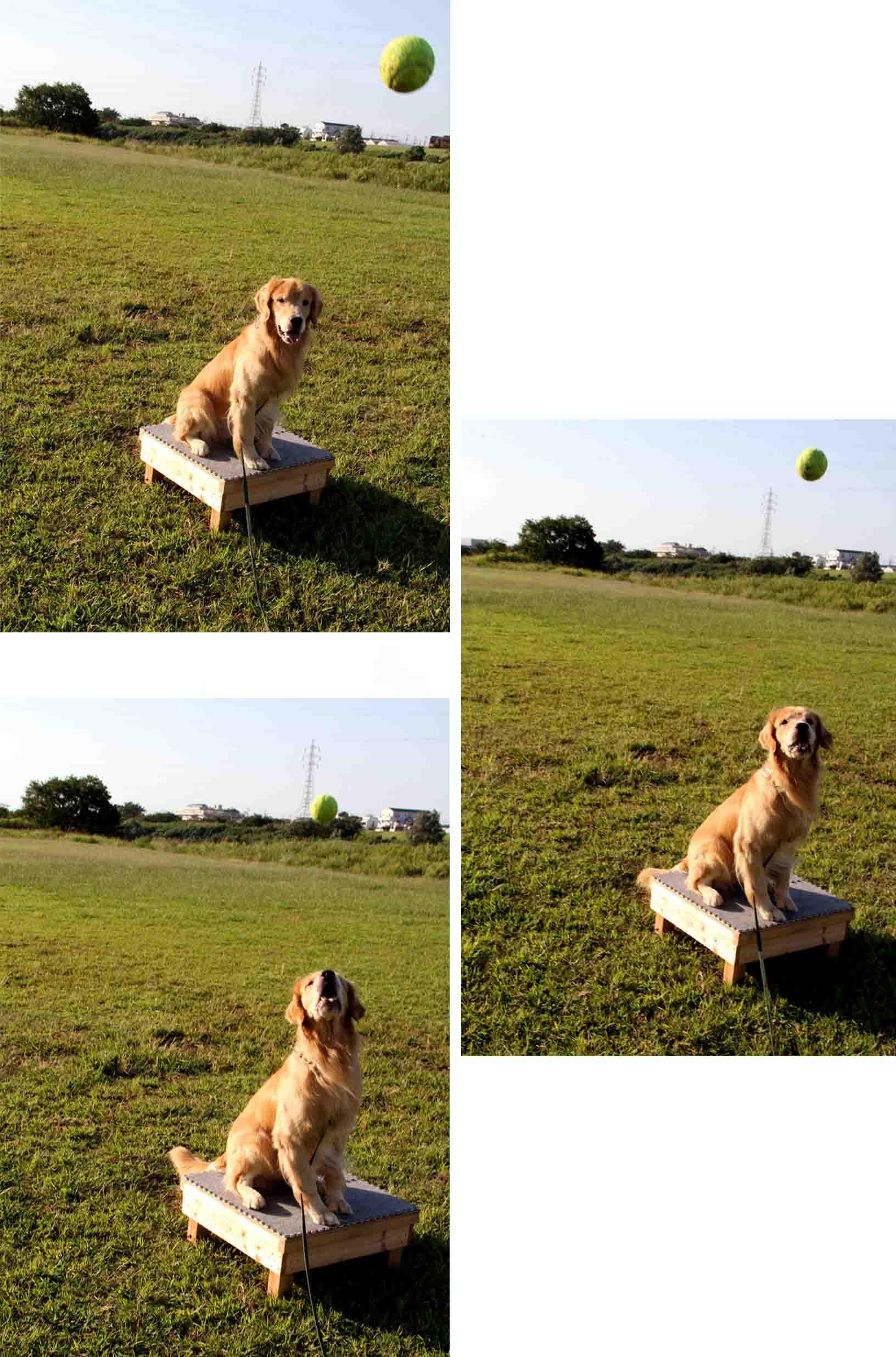 キャッチ!ボール(1)