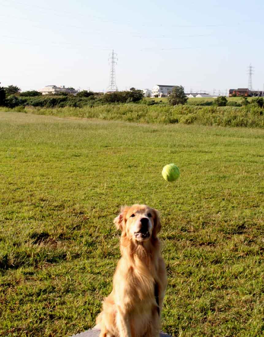キャッチ!ボール(3)