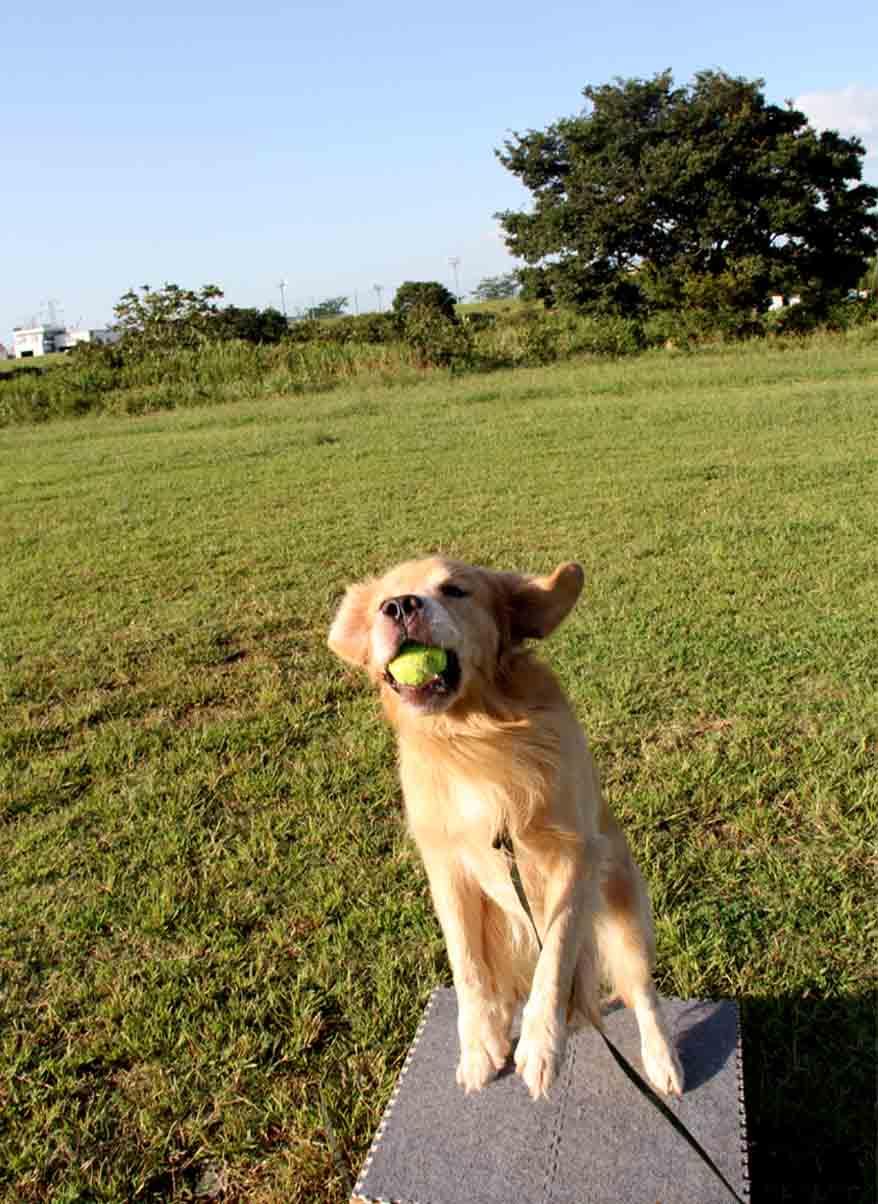 キャッチ!ボール(9)