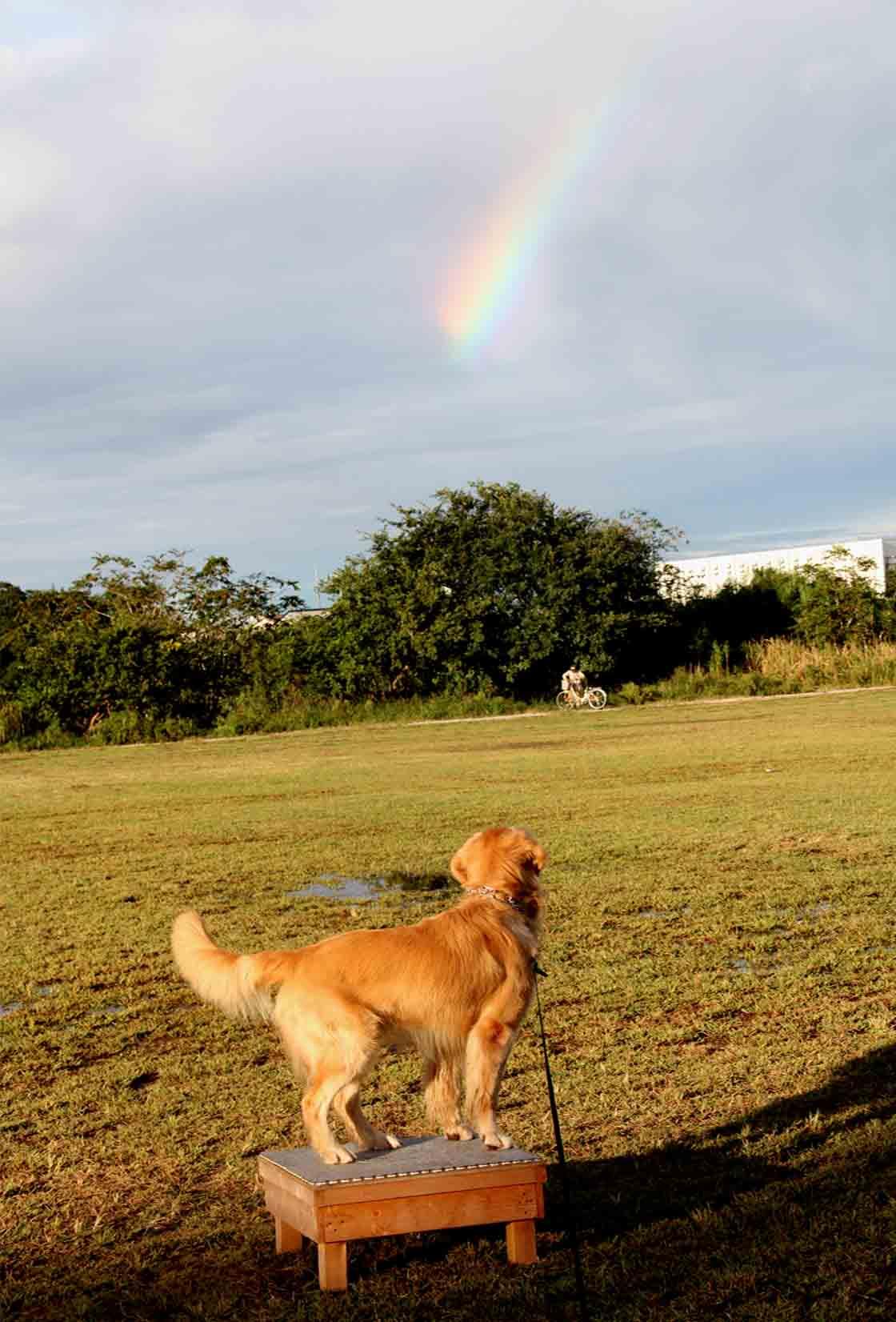 10月2日の虹(1)