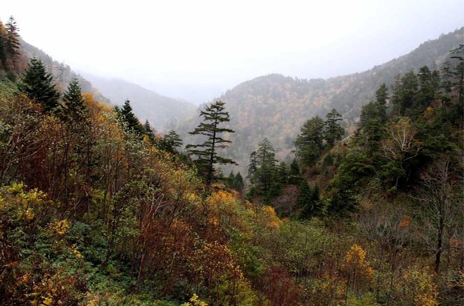 雨の山中(6)