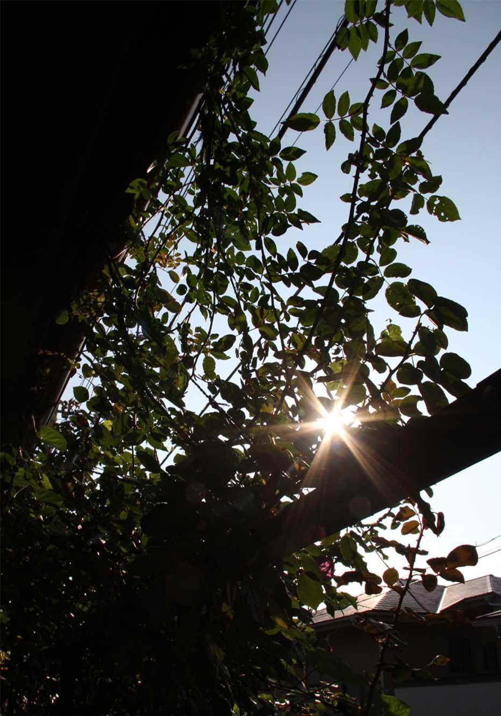 日に日に弱くなる陽の光