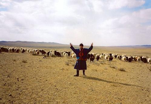 ゴビ砂漠で羊追い