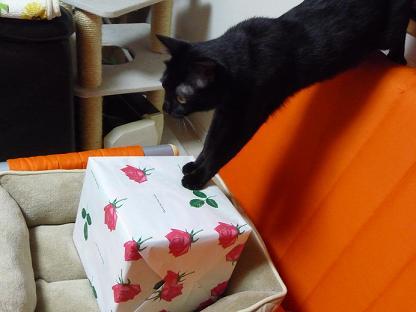 ニケとプレゼント